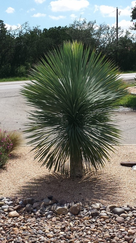 Plant Information Built To Bloom Landscape Built To
